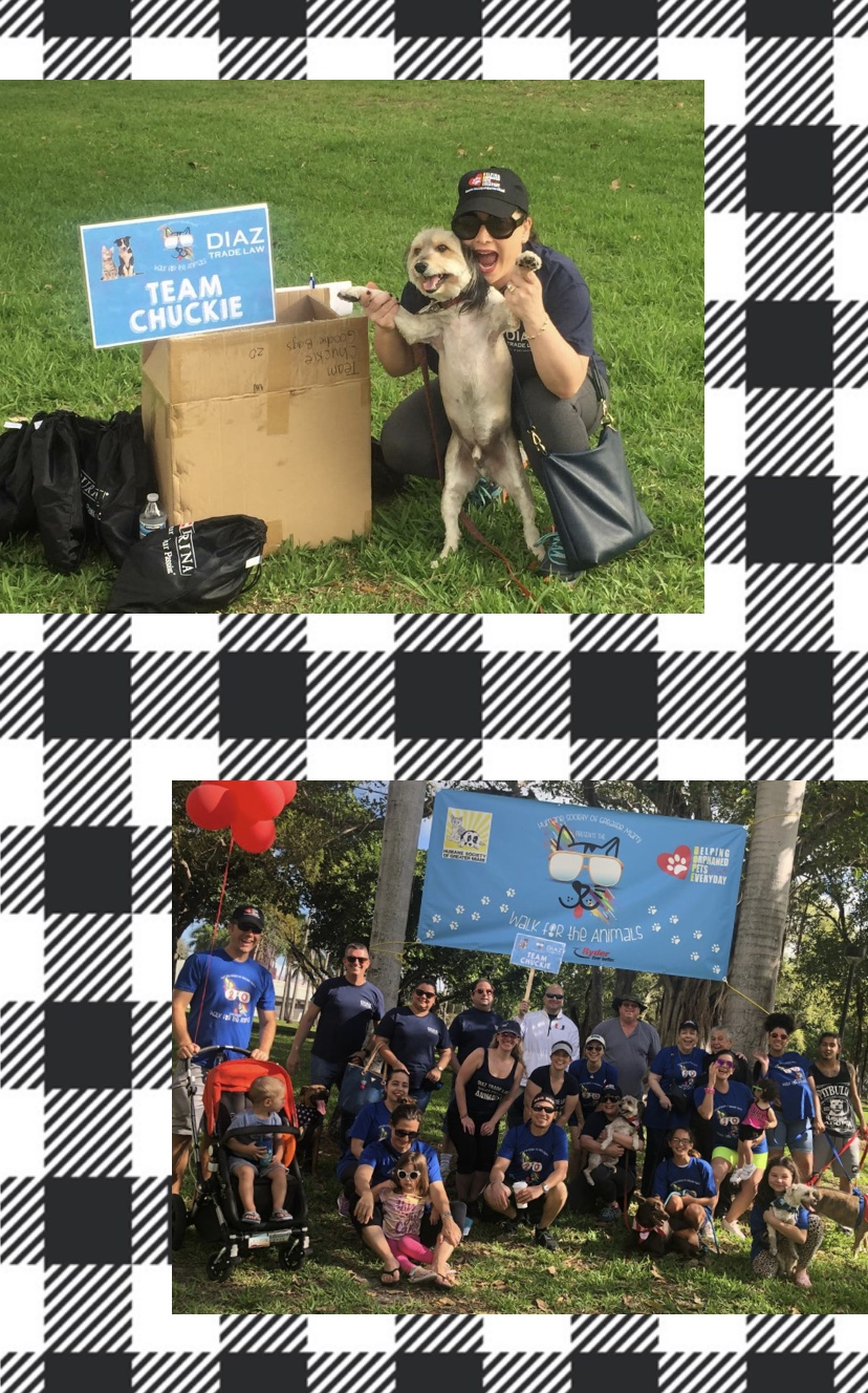 walk for animals 3.jpg.png